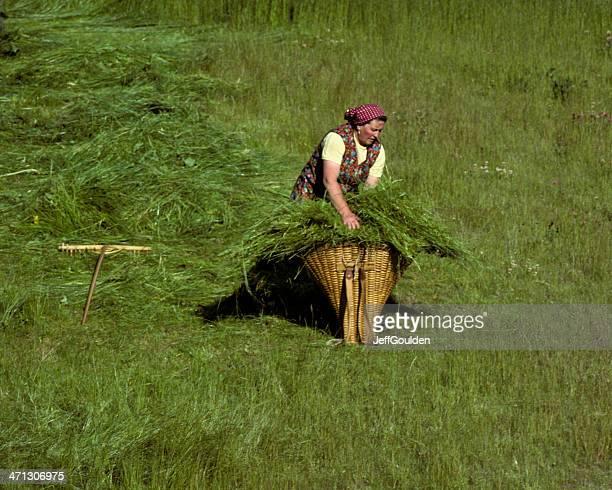 Swiss Woman Gathering Hay into a Wicker Basket