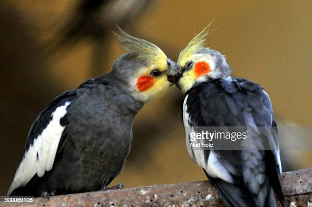 BIRDS on December 312017 in KolkataIndia