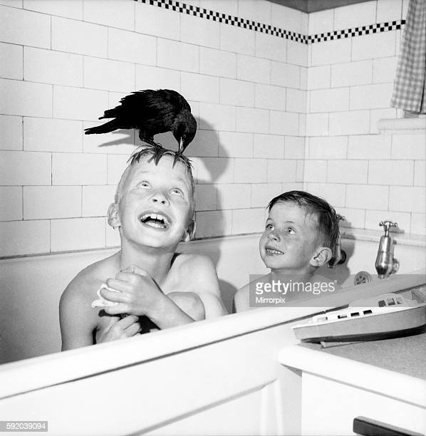 On me 'ead son Mike and Mark with their pet Jackdaw seen here at bath time July 1952 C3436