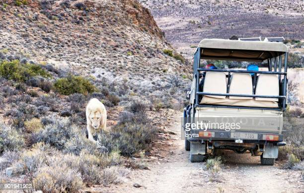 on safari in the little karoo, south africa - the karoo stock photos and pictures