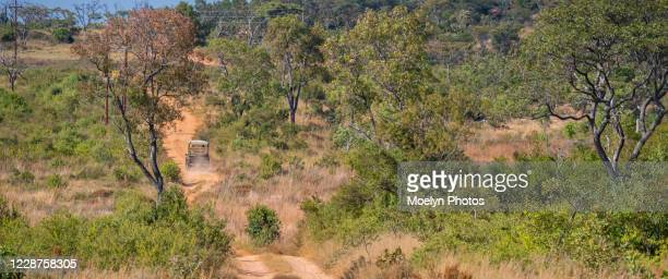 on safari - kicking up dust - limpopo province stock pictures, royalty-free photos & images