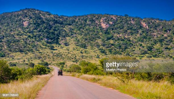 on safari - kruger national park - mpumalanga province stock pictures, royalty-free photos & images