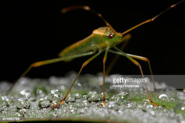 on six legs...assassin bug - assassin bug stock pictures, royalty-free photos & images