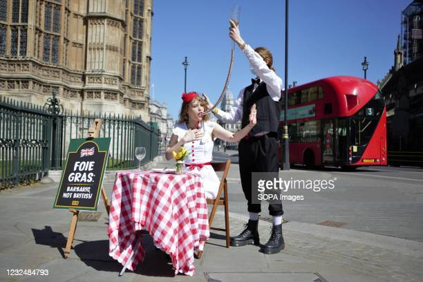 On St Georges Day, 23 April, a PETA supporter in a red-and-white English flagstyle dress sits at a dinner table with a sign reading Foie Gras:...