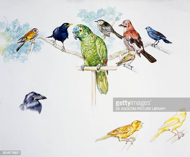 On the branch European Goldfinch Common Blackbird Gray catbird Eurasian Jay Redeyed Vireo House Sparrow Passeriformes on perch Bluefronted Amazon...