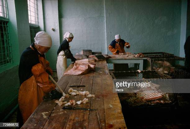 On the Caspian seaside employees cut off the meat of freshly thawed sturgeons in Atyrau fish factory which was put into private hands after the fall...