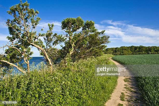 on the coastal cliffs of staberhuk, fehmarn island, baltic sea, schleswig-holstein, germany, europe - fehmarn stock pictures, royalty-free photos & images