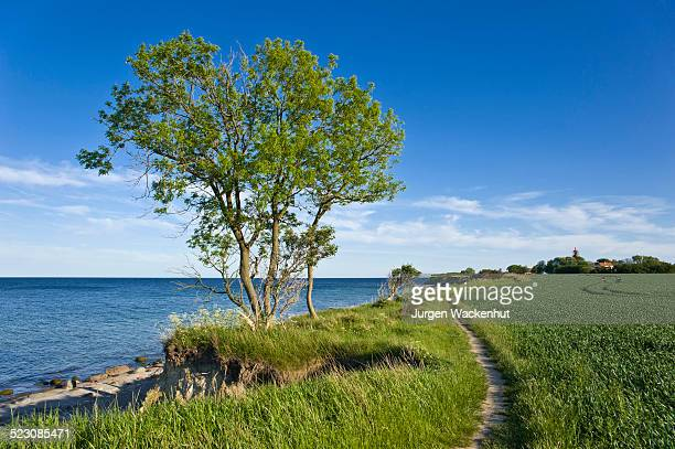 on the coastal cliffs of staberhuk, fehmarn island, baltic sea, schleswig-holstein, germany, europe - fehmarn stock-fotos und bilder