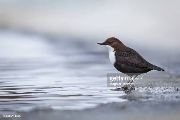 on the edge - bamboo dipper stock photos and pictures