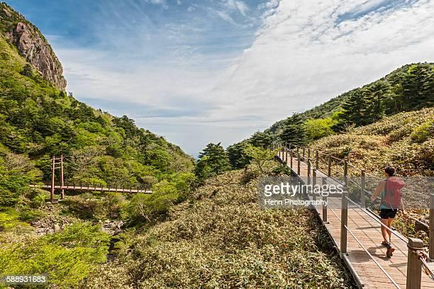 on the gwaneumsa hiking trail to hallasan on jeju island - hallasan stock photos and pictures