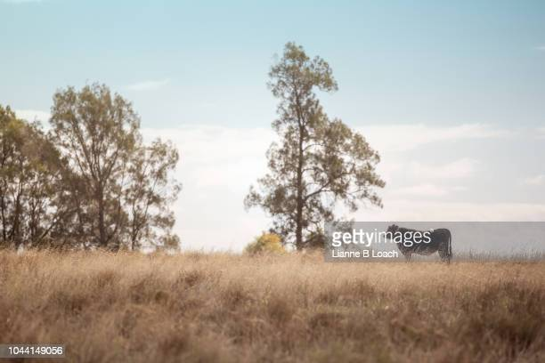 on the hill 2 - lianne loach stock pictures, royalty-free photos & images