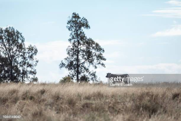 on the hill - lianne loach stock pictures, royalty-free photos & images