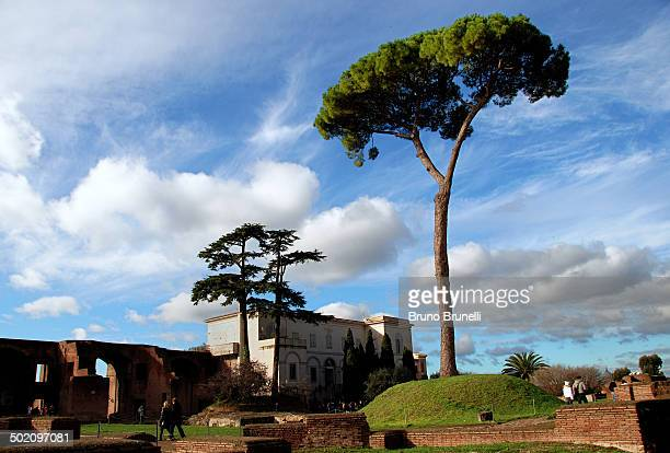 On the Hill that used to be the home of the Roman Emperors there is a large umbrella pine. One of the symbols of Rome