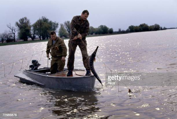 On the most renowned site for fishing sturgeons two inspectors of the border patrols' fishing brigade Vladimir Chernykh and Oleg Yartchenko free a...