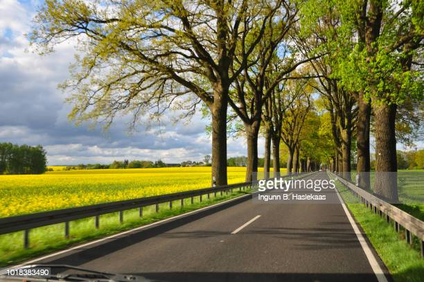 On the road again. Springtime landscapes in Germany. Canola fields and roadside trees.