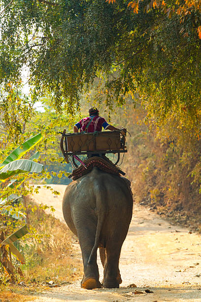 On the road of elephant camp in Ban rumit (thailand)