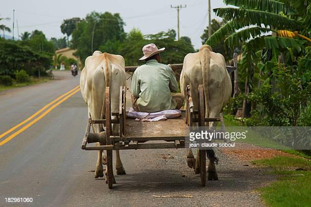 on the road to kep - ox cart stock-fotos und bilder
