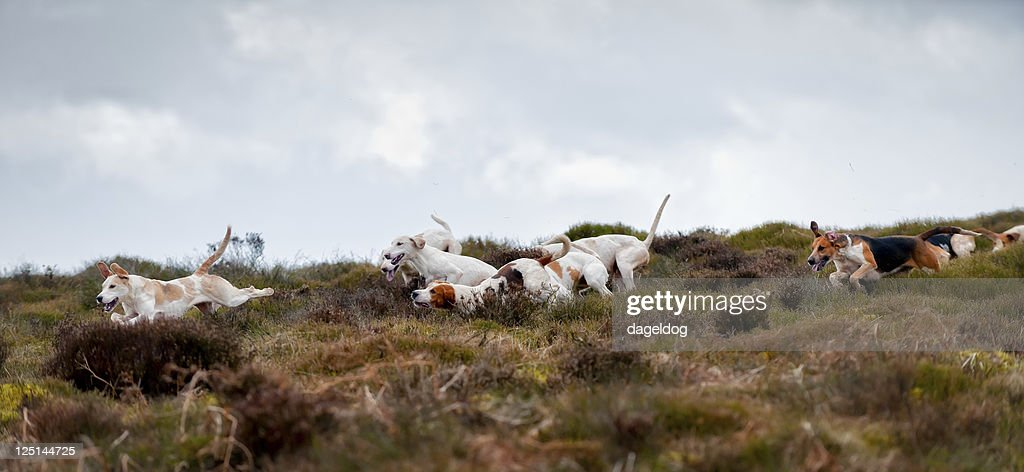 on the scent : Stock Photo