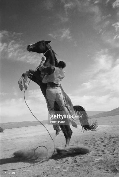 On the set of the United Artists film The Misfits directed by John Huston a rearing horse sweeps its handler off his feet and leaves him clinging to...