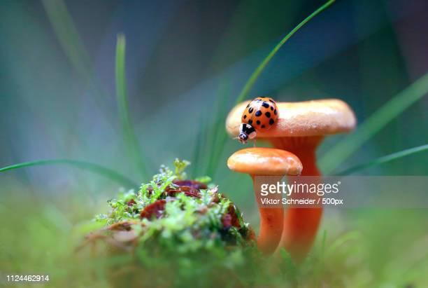On The Steps Of Mushrooms.