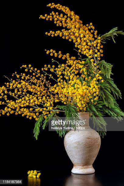 on the table is a vase with mimosa on a black background - mimosa fiore foto e immagini stock