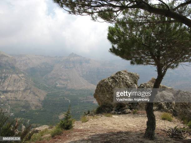 on the way to cedars of god, mount lebanon, kadisha valley - zeder stock-fotos und bilder