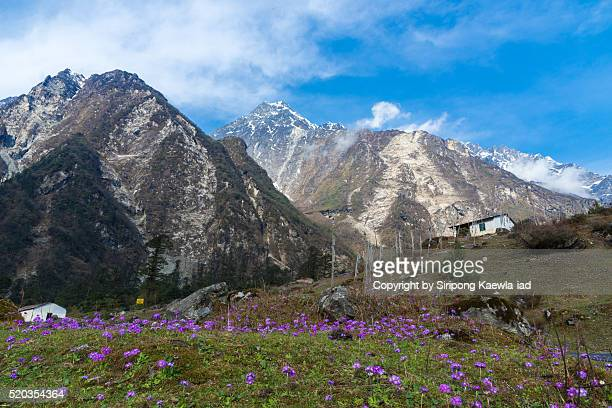 on the way to yumthang valley - sikkim stock pictures, royalty-free photos & images