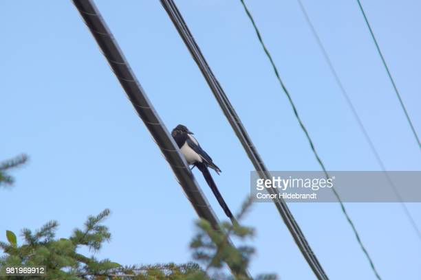on the wire - conor stock pictures, royalty-free photos & images