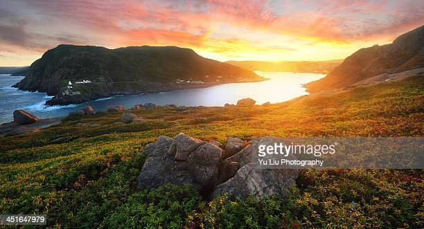on top of signal hill - newfoundland and labrador stock pictures, royalty-free photos & images