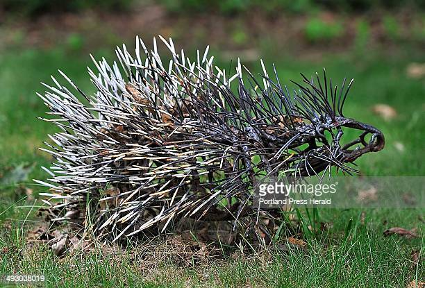 On Tuesday August 13 This porcupine is one of many Wendy Klemperer metal animal sculptures on the access road to the Portland Jetport
