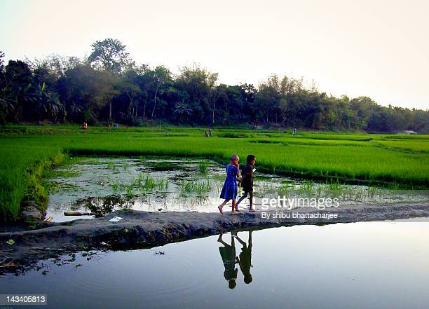on way back home - bangladesh village stock photos and pictures