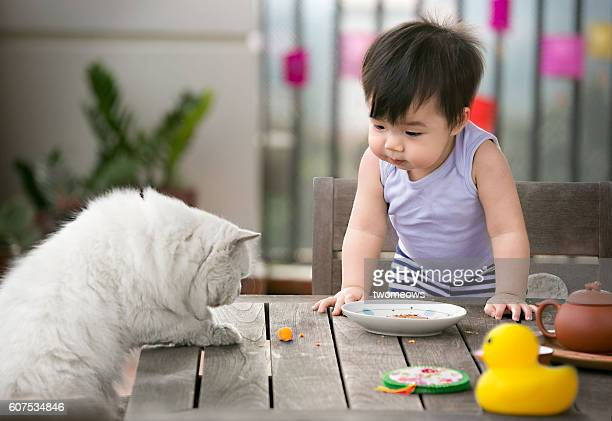 One asian toddler and a cat looking at food.
