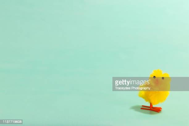 one baby chicken on a mint background at easter. - easter stock pictures, royalty-free photos & images