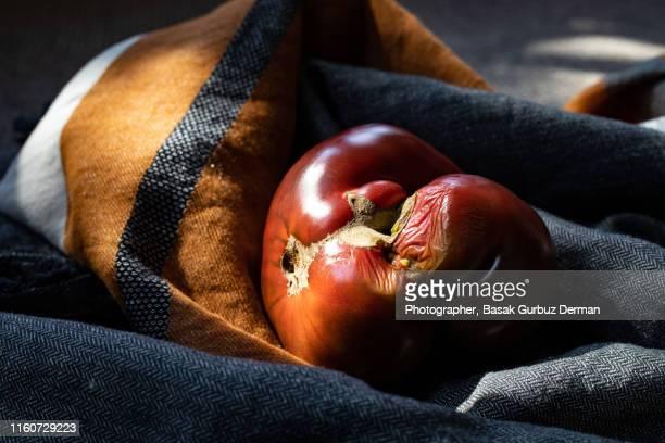 one big rotten heirloom tomato - basak gurbuz derman stock photos and pictures