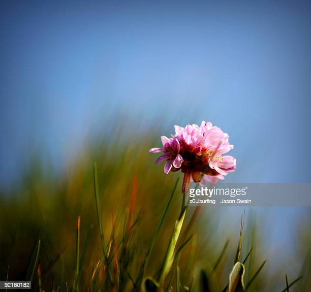 one - blur (thrift) - s0ulsurfing stock pictures, royalty-free photos & images