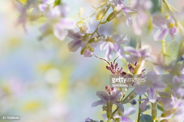 one butterfly stop on pink flower on soft blurred background. - orchid flower stock pictures, royalty-free photos & images