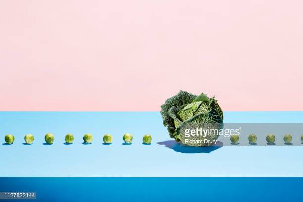 one cabbage in a row of sprouts - comparison stock pictures, royalty-free photos & images