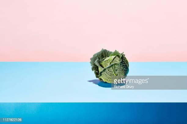 one cabbage on a taple top - concetti e temi foto e immagini stock