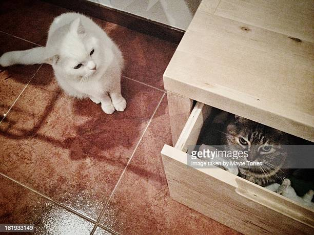 one cat hiding and another one looking - een pak voor de broek geven stockfoto's en -beelden