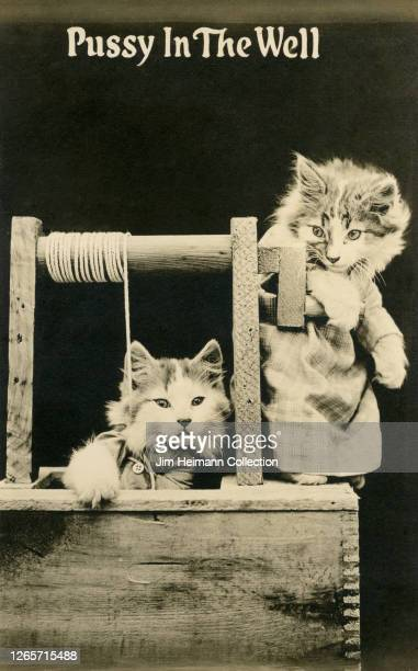 One cat rescues another cat from a well, circa 1910.