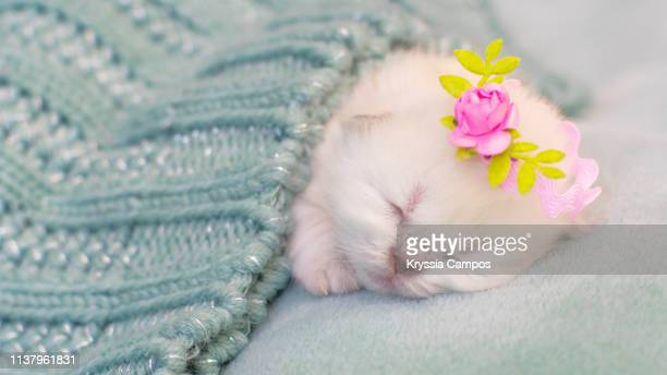 one day old white kitten on blanket - gattini appena nati foto e immagini stock
