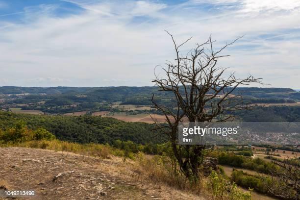 one dead tree on the staffelstein - upper franconia, bavaria/ germany - ausgedörrt stock-fotos und bilder