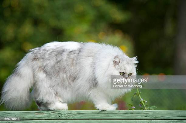 one fat cat - fat cat stock photos and pictures