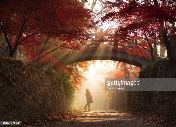 one female walking under a old stone bridge ,sunshine going through the red maple forest in a nice fall season - lush stock pictures, royalty-free photos & images