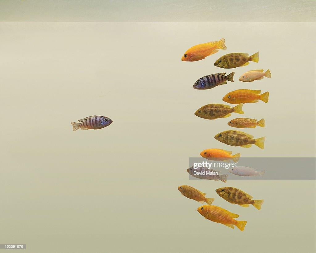One fish looking at a variety of fish. : Stock Photo