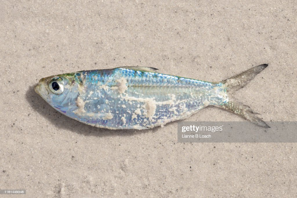One Fish : Stock Photo