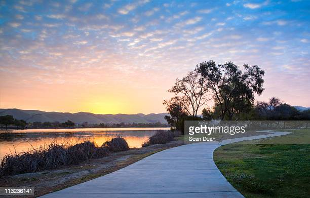 one goose in morning - fremont california stock pictures, royalty-free photos & images