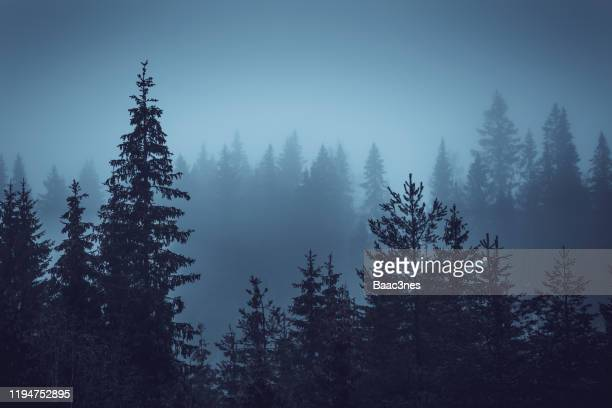 one grey and foggy afternoon in the forest - treetop stock pictures, royalty-free photos & images