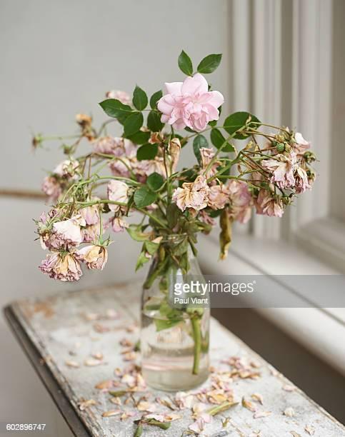 One healthy pink rose in vase