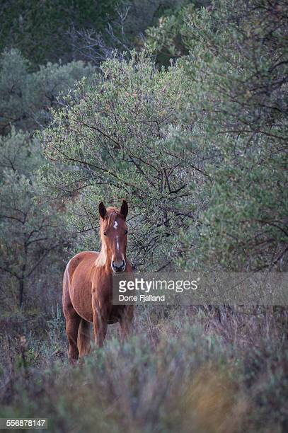 one horse in an olive grove - dorte fjalland stock pictures, royalty-free photos & images